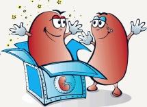 Kidney surprise